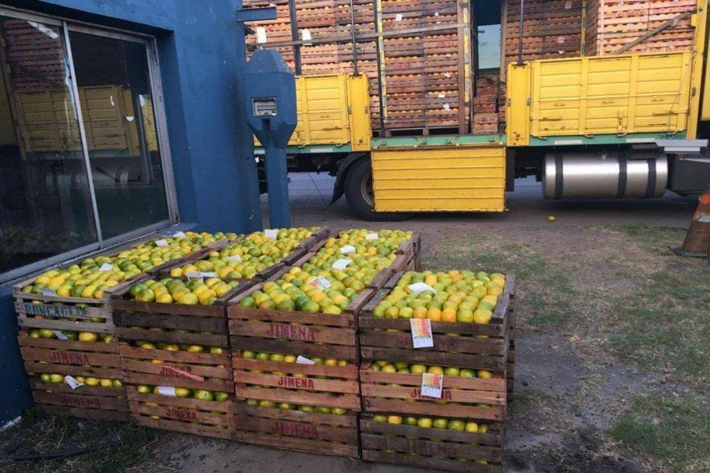Sigue el control fitosanitario a transportes de jugos y frutas cítricas