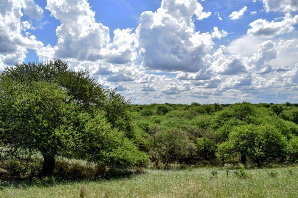 """Futura creación del Parque Nacional del Bosque de Caldén en La Pampa: """"Estamos trabajando para lograr financiamiento internacional"""""""