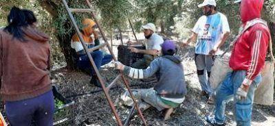 UATRE y RENATRE relevaron 1250 trabajadores del sector olivícola en La Rioja