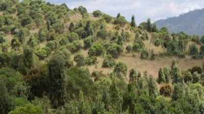 Fundación Coca-Cola y Grupo Río Bogotá celebran el Día Mundial del Agua con la siembra de 1.000 árboles