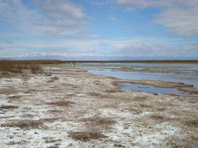 El poder de las alianzas: restauran un humedal clave para la biodiversidad en Mendoza