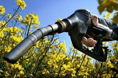 Ley de biocombustibles: las claves del proyecto que impulsa el Gobierno