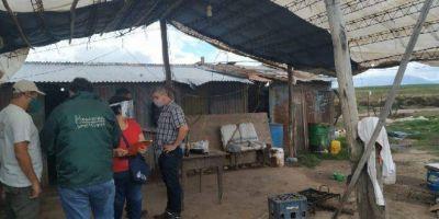 Detectan trabajo infantil en la cosecha de papa y nuez en Catamarca