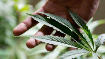 San Luis producirá cannabis medicinal y fomentará su cultivo, industrialización y comercio
