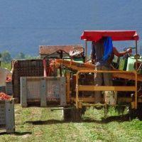 Francisco al Banco Mundial y FMI: finanzas al servicio del bien común