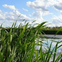 Vecinos autoconvocados vuelven a marchar por la Reserva Natural laguna de Rocha