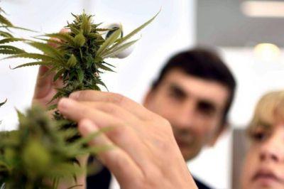 La UNLP cuenta con la aprobación para cultivar cannabis con fines científicos