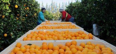 """Empezaron las paritarias para los trabajadores de la cosecha, y Alcides Camejo resaltó: """"Los empresarios deben entender que el ingreso digno de los trabajadores es un derecho"""""""