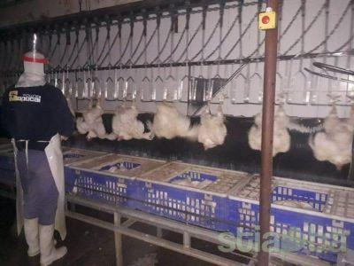 Paritarias: la FTIA destacó el importante incremento para el sector avícola