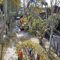 El gobierno municipal puso en marcha el Plan de Poda en diversas localidades de Tigre