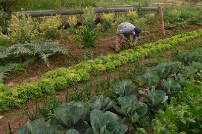 De raíz, cambios en la producción de alimentos y la distribución de la tierra