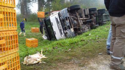 Volcó un camión cargado con pollos en la Ruta 192