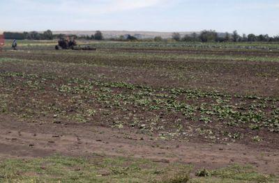 Buscan erradicar la explotación laboral en el cordón frutihortícola marplatense