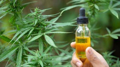 Zona Oeste solidaria: Intercambian aceite de cannabis por alimentos