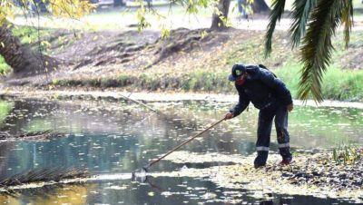 Nuevas tareas de limpieza y saneamiento en el Lago del Bosque