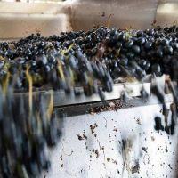 El INV aprobó nuevos productos y bebidas elaborados con uva: de qué se trata