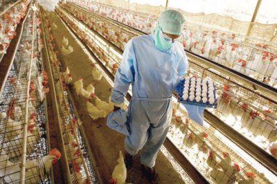 Trabajadores avícolas acordaron un incremento salarial del 37% desde junio