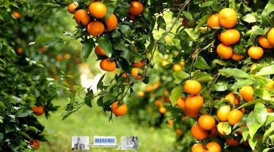 Proponen crear la Ley del Programa para Promoción, Fomento y Desarrollo de la Producción de la Fruticultura