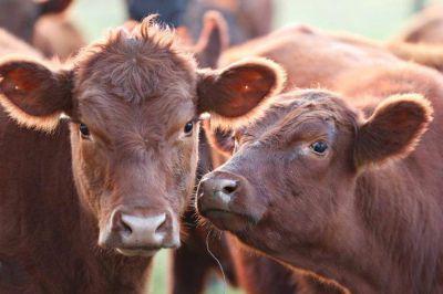 Baja de impuestos, créditos y controles: cómo es el Plan Ganadero del Gobierno para aumentar la producción de carne