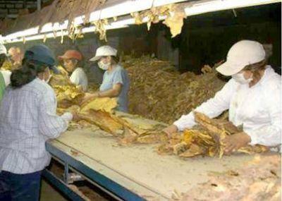La UITA lanza acciones urgentes en favor de trabajadores del tabaco