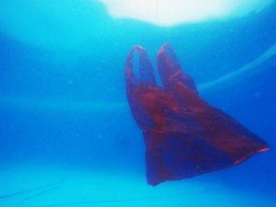 Más de 3,5 billones de bolsas de plástico terminan en la naturaleza