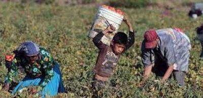 Funcionarios, empresarios y gremios analizaron naturalización de trabajo infantil