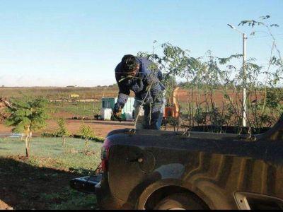 500 árboles fueron plantados en la ciudad de Posadas