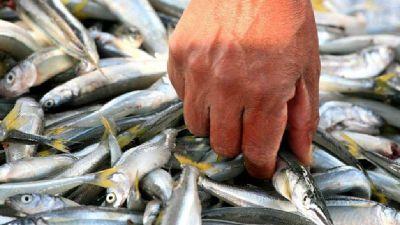 Detectan arsénico y mercurio en peces del embalse de Río Tercero