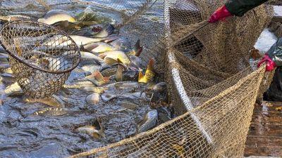 Contra la corriente, la actividad pesquera sale a flote de la pandemia