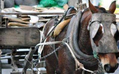 La Matanza: Proponen prohibir la tracción a sangre y entregar bicicletas eléctricas a los recolectores