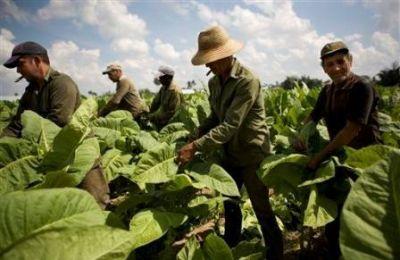 Santiago del Estero: Expectativa laboral de trabajadores del STIA por el Intercosecha
