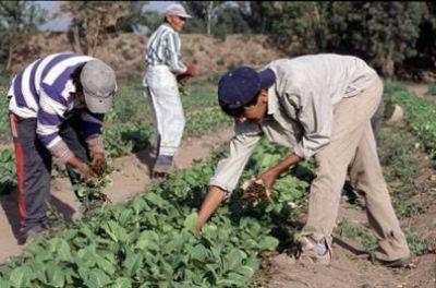 Aumenta el salario básico del peón de campo