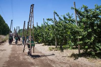 El RENATRE convocó a los gobiernos provinciales para que se adhieran al Decreto que promueve la compatibilización de planes sociales con el trabajo rural registrado