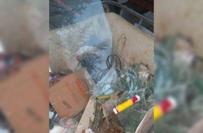 """Piden a los vecinos que """"no tiren basura"""" en los tachos para reciclaje de la plaza Constitución"""