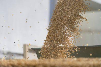 La próxima cosecha de soja sería la más baja en 20 años con una producción de 48,8 millones de toneladas