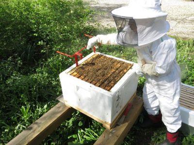 Inédito «abejazo» de apicultores contra el uso intensivo de agroquímicos