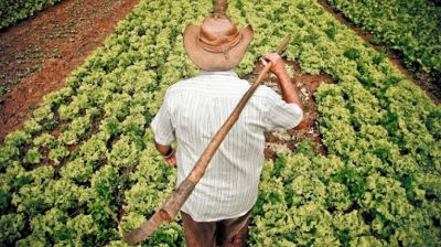 Régimen para la compra estatal de alimentos de la agricultura familiar