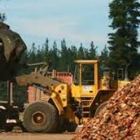 La forestoindustria en Misiones superó los 10 mil trabajadores activos y registró un crecimiento del 4,9% en el último año