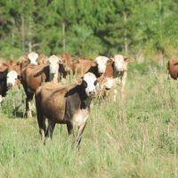 Tras las lluvias crece las expectativas del sector ganadero
