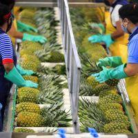 Valor de las exportaciones de productos de Costa Rica creció 27% en los primeros nueve meses de 2021