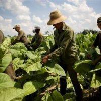 Tucumán: STIA rechazó la oferta del plan interzafra de $10.000 por insuficiente