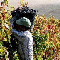 Diputados tratan hoy la jubilación anticipada de trabajadores de viña
