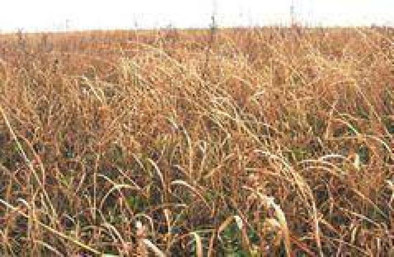 Peligra un tercio del área cultivable del país por la persistencia de la sequía