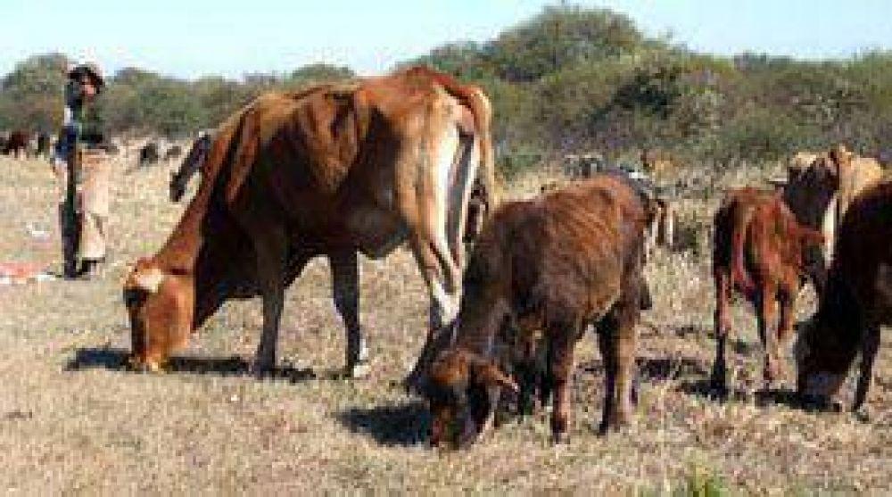 Por la sequía que vive el país, ya está dañada el 33% del área agrícola