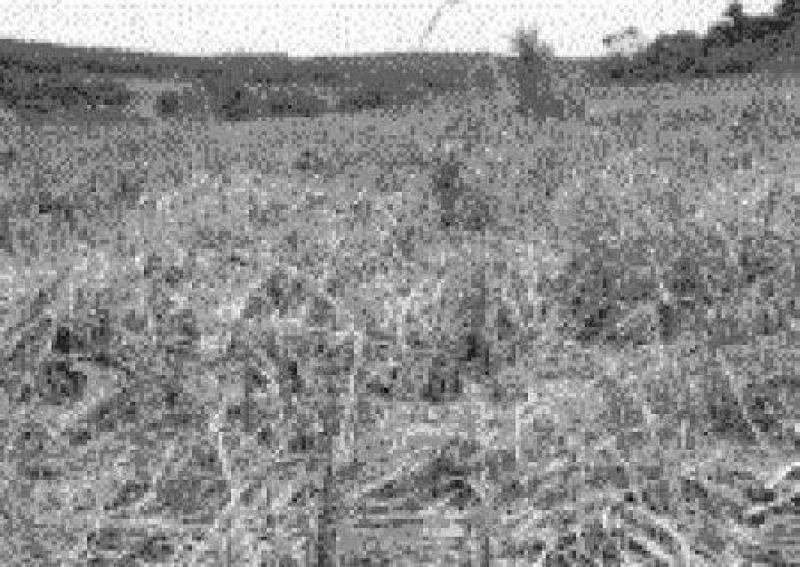 Alto Paraná envenena campos de Colonia Delicia