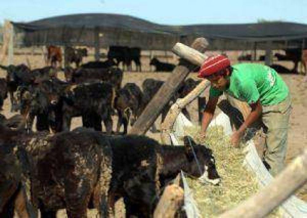 Recibieron ayuda 49 de los 3.800 ganaderos de Mendoza