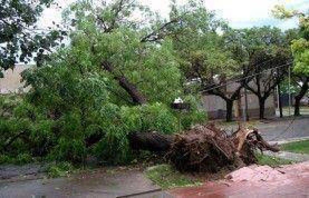 El temporal de esta tarde arrancó de cuajo el arbolado público
