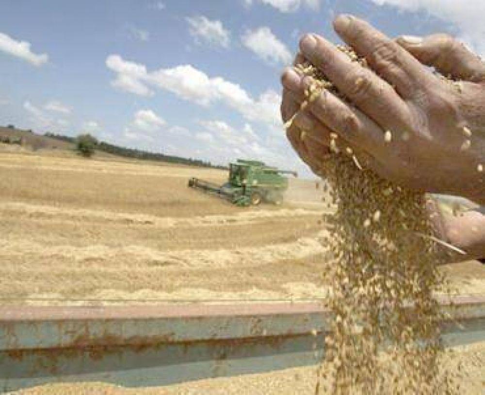 Los rindes de trigo superan los 3.600 kilos por hectárea