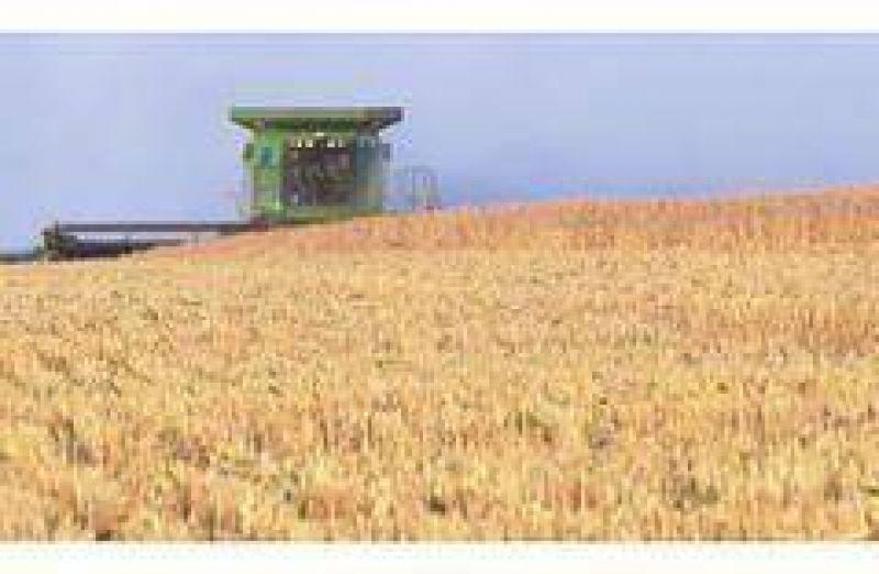 Prometen créditos blandos para que productores no malvendan el trigo