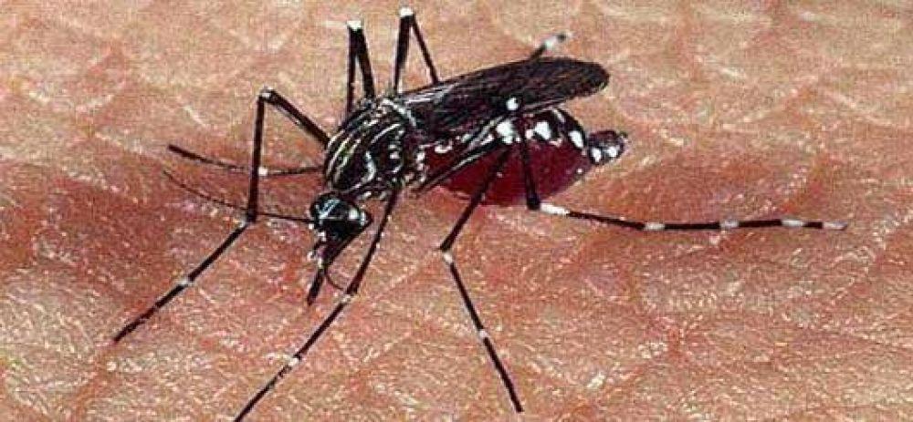 """Dengue: la Provincia confirmó """"un caso"""" en San Nicolás"""